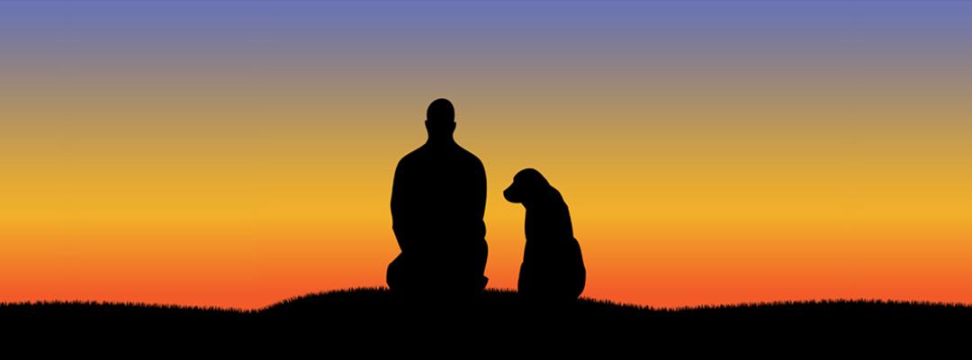 Pienso Super Premium perro puesta de sol