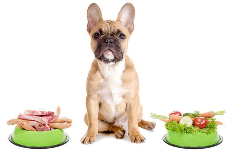 No solo de carne vive el perro